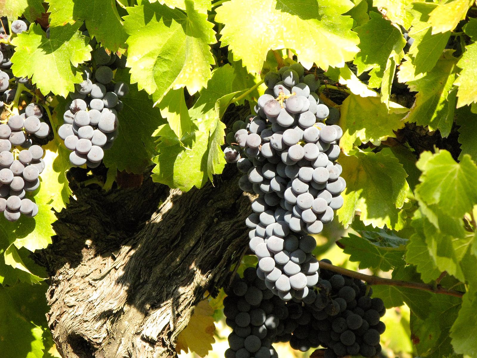 D'Abrigeon œnologie conseils – Œnologue - Gard – Hérault - Vaucluse – Bouches-du-Rhône